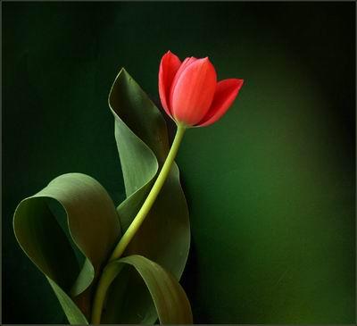 http://emertat.persiangig.com/image/lale.jpg